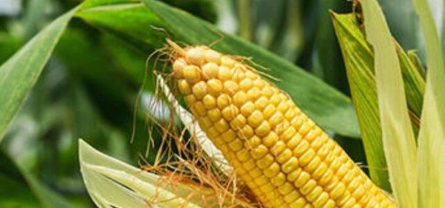 Rohstoffe zur Herstellung von Biokunststoff