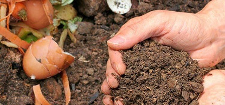 Verrottung und Kompostierung