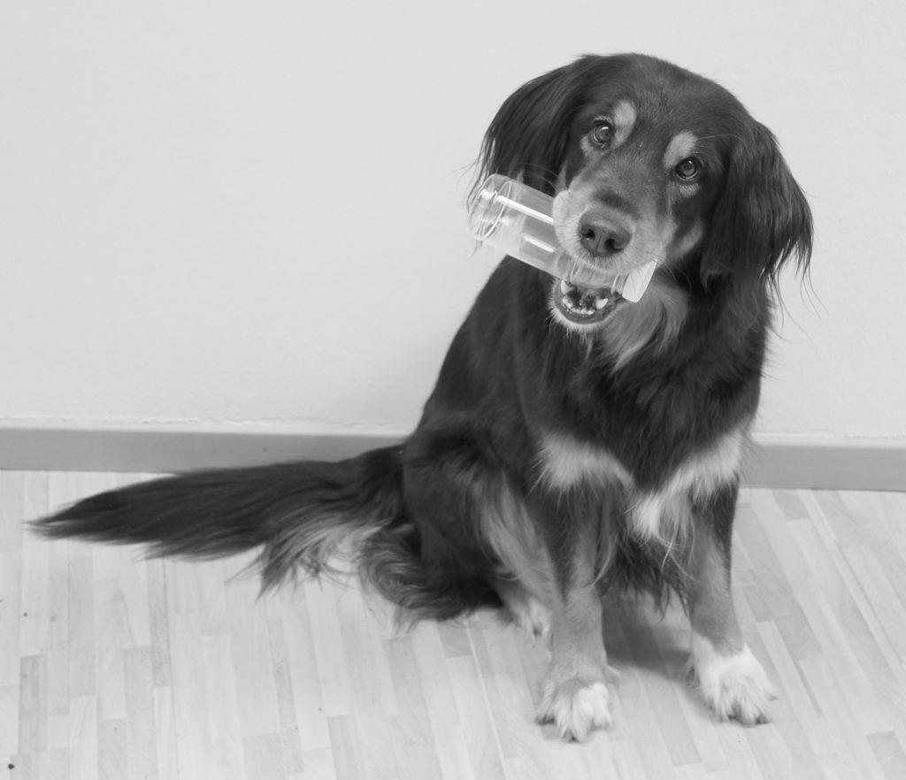 NaKu Hund Tinkerbell