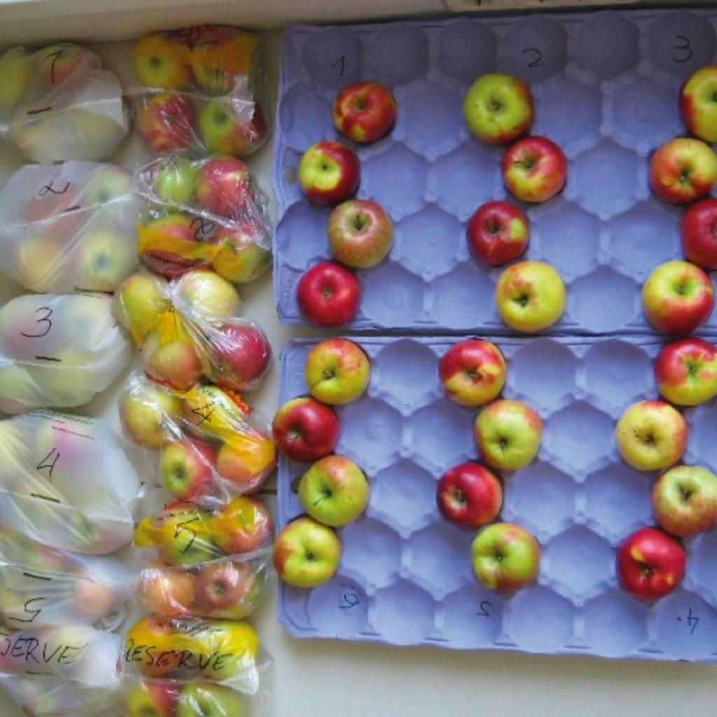 Äpfel der BOKU Frischhaltestudie