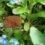 NaKu Gartentipp: Kaffeesatz als Düngemittel