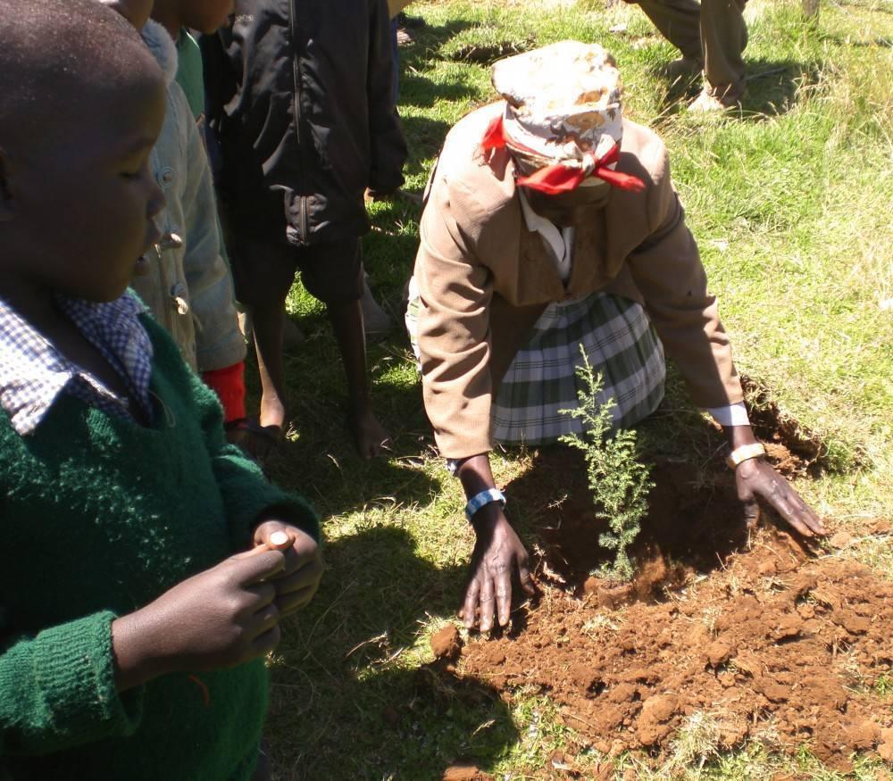 Einpflanzen eines Baums