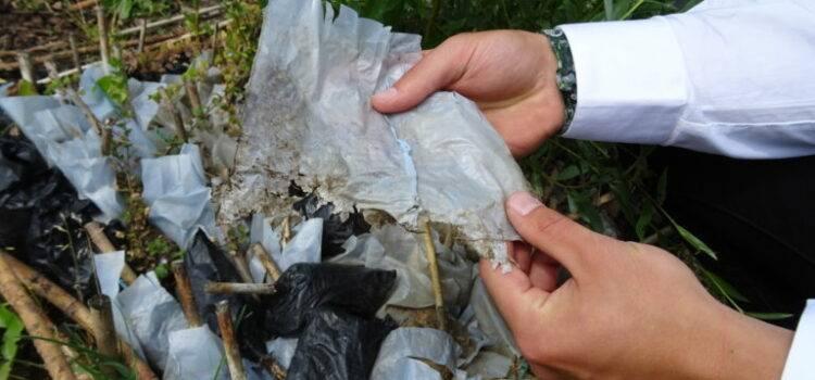 Für Gärtnereien der NaKu Biopflanzsack