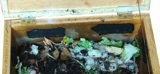 Kompost für Zuhause - die Wurmbox